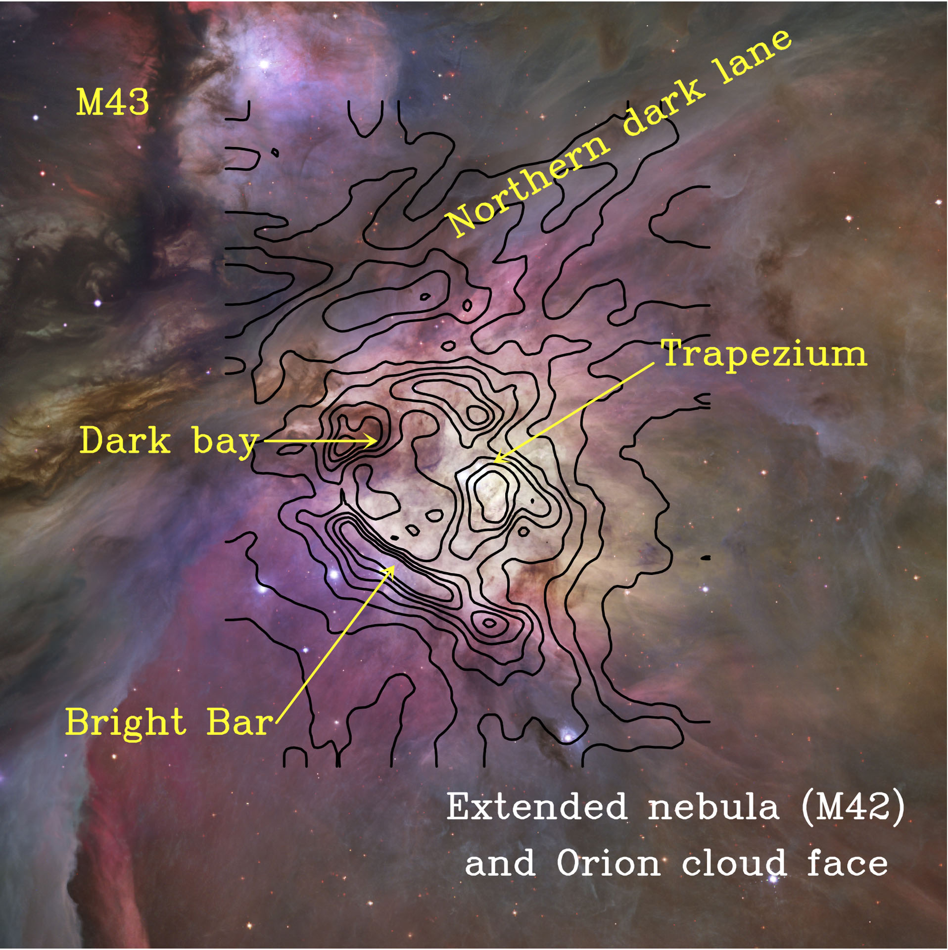 Colour-composite image of the Orion Nebula (M42) taken in the visible-light with the Hubble Space Telescope (Robberto et al. 2013). The Orion molecular cloud, where new protostars are developing, lies behind the ionized nebula. Black contours show the far infrared C+ emission detected with Herschel/HIFI tracing the skin of the cloud (Goicoechea et al. 2015)